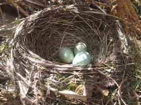vink eier